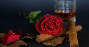 En la variedad está el gusto: Vitolas de cigarros premium