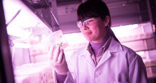 Ciencia e innovación, dos pilares fundamentales en la estrategia en BAT